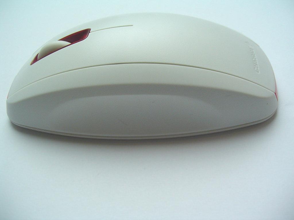 Seitenansicht der Maus