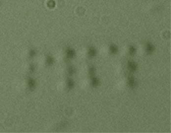 """E. coli""-Bakterien formen MIT-Logo"