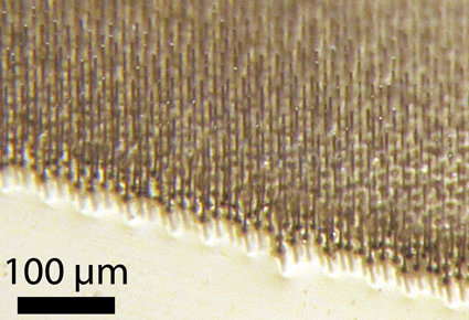 Bild einer in Polymer eingebetteten Siliziumdrahtmatrix