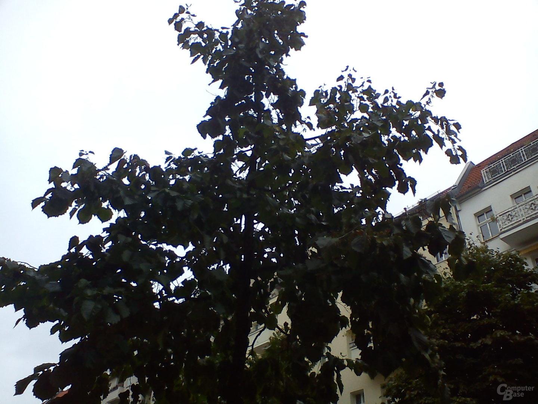 Kameraaufnahme 4 (Baum)