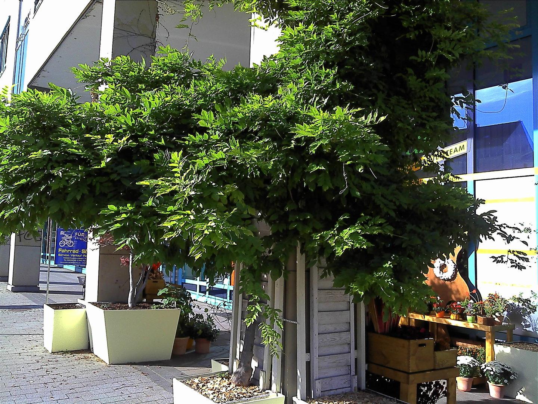 Beispielfoto (Frankfurt/Oder)