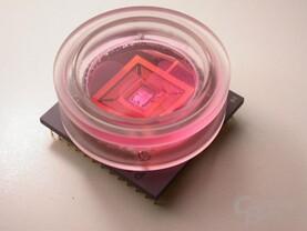 Einzelne Zellen sind in die Nährlösung direkt auf dem Sensorfeld des Neuro-Chip platziert und bilden dort neuronale Netzwerke.