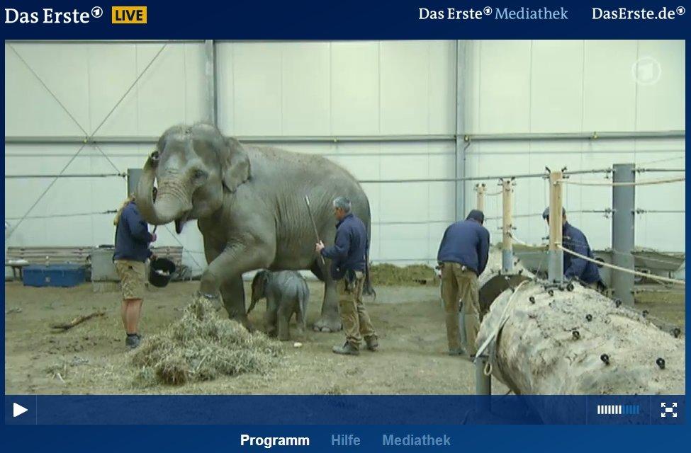 www.daserste.de live stream