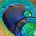 """5K""-Monitor: Dell bietet 5.120 × 2.880 Pixel ab Dezember"