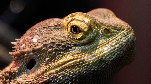 Xbox Live: Hackerguppe Lizard Squad legt Netzwerk lahm