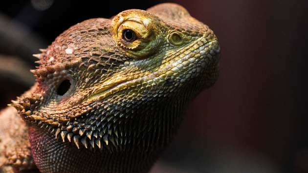 Lizard Squad: Hacker legen Xbox Live und PlayStation Network lahm