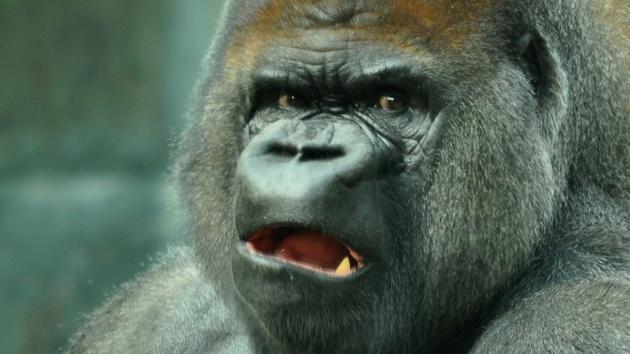 Corning Project Phire: Gorilla Glass will so hart wie Saphirglas werden