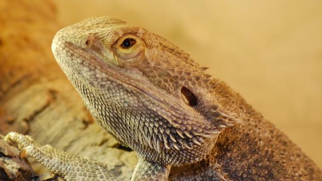 Hacker: Lizard Squad greift PlayStation und Xbox an