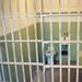 Netzpolitik.org: Generalbundesanwalt ermittelt wegen Landesverrats