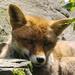 Mozilla: Firefox 41 mit verbesserter Speichernutzung