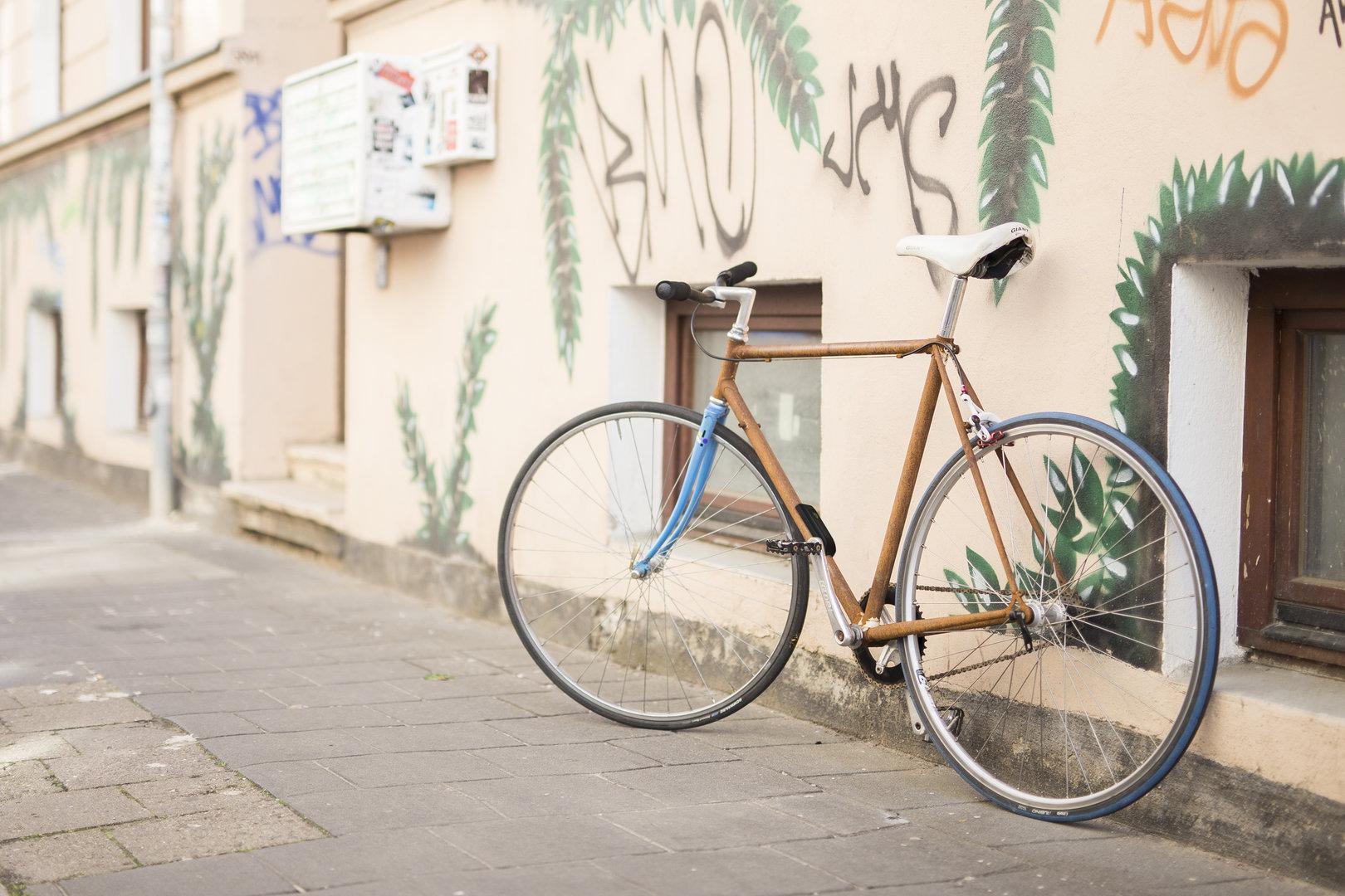 insect montiert am Fahrrad