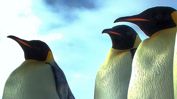 Remote Desktop: AnyDesk jetzt auch für Linux und BSD