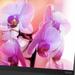 Lenovo ThinkVision X1: UHD-Monitor mit USB Typ C und schmalem Rahmen