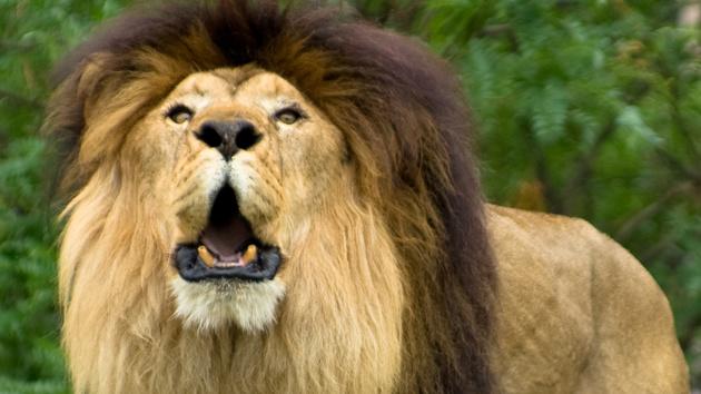 Browser: Brendan Eich stellt Brave mit neuem Werbekonzept vor