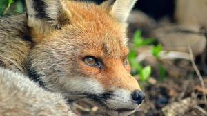 Browser: Firefox 44 sperrt unsignierte Add-Ons und benachrichtigt