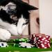 Steam: Valve geht gegen Glücksspiel-Anbieter vor