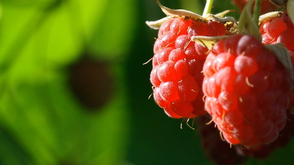 Raspberry Pi: Distribution Raspbian gegen Angriffe abgesichert