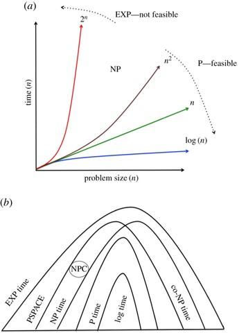 Berechnungsdauer polynominalen und exponentiellen Algorithmen