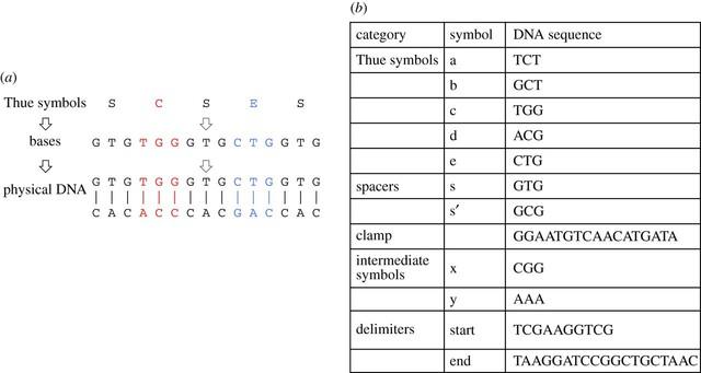 Funktionsschema eines DNA-basierten Rechenwerkes