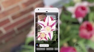 Google Lens erkennt Blumen