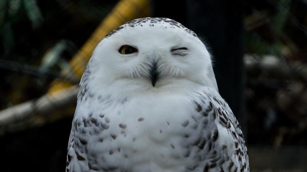 Snowy Owl: AMDs Schnee-Eule zeigt sich als Epyc 3251