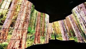 LG: Aufrollbarer OLED-Fernseher soll 2019 marktreif sein