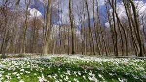 """Fotowettbewerb: Abstimmung zum Thema """"Es wird Grün der Frühling"""""""