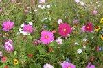 Sommerwiese.jpg