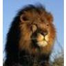 Lion88