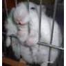 Hamsterlilly