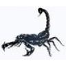 a_scorpion