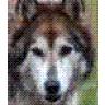 der_wolf